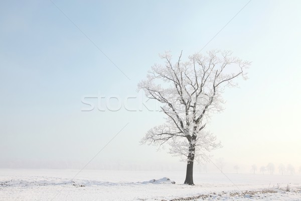 Frosty winter tree in the filed Stock photo © nature78