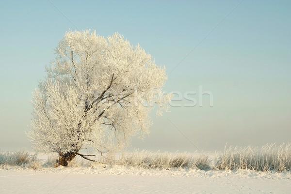 зима пейзаж дерево Blue Sky природы снега Сток-фото © nature78