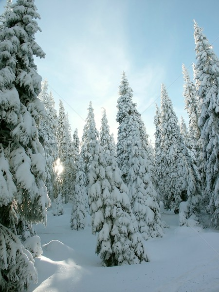 Winter morning in the mountains Stock photo © nature78