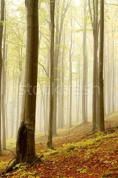 Stock fotó: ősz · erdő · hegy · emelkedő · természet · tartalék