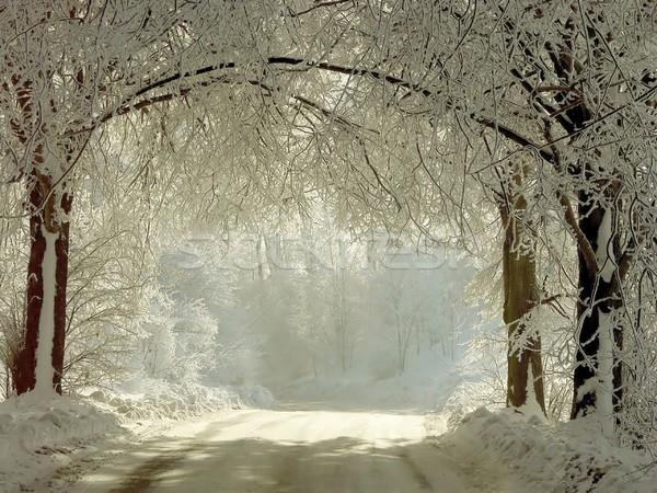 Winter lane Stock photo © nature78