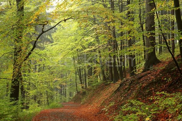 Sentier forêt route paysage fond Photo stock © nature78