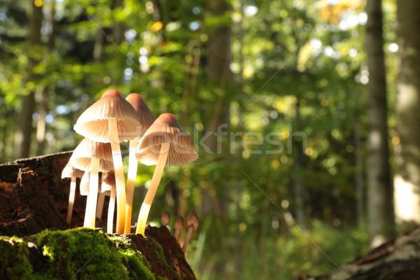 Champignons rot boom bos familie ruimte Stockfoto © nature78