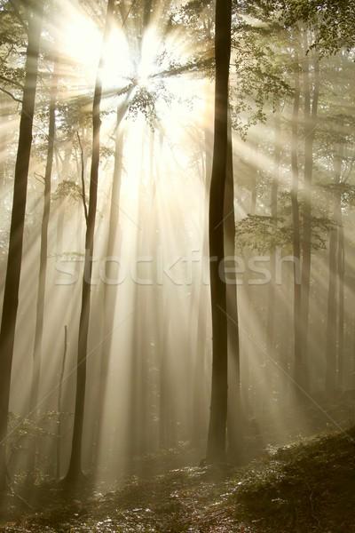 Misty automne forêt soleil lumière du soleil brillant Photo stock © nature78