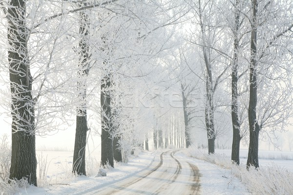 Hiver matin rural route arbres Photo stock © nature78