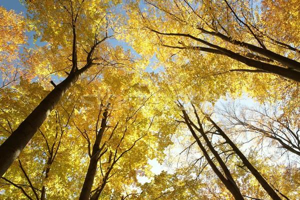 ősz fák felhőtlen reggel égbolt nap Stock fotó © nature78