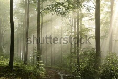 Misty autunno foresta all'alba raggi di sole Foto d'archivio © nature78