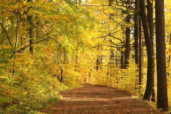 пути осень лес сумерки полоса ведущий Сток-фото © nature78
