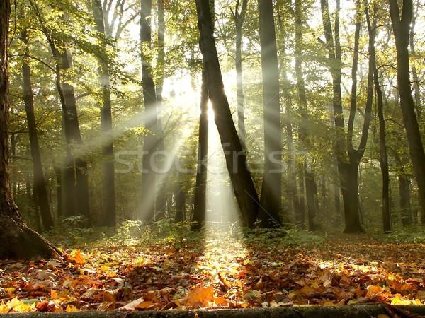 Otono forestales sol luz del sol árboles brumoso Foto stock © nature78