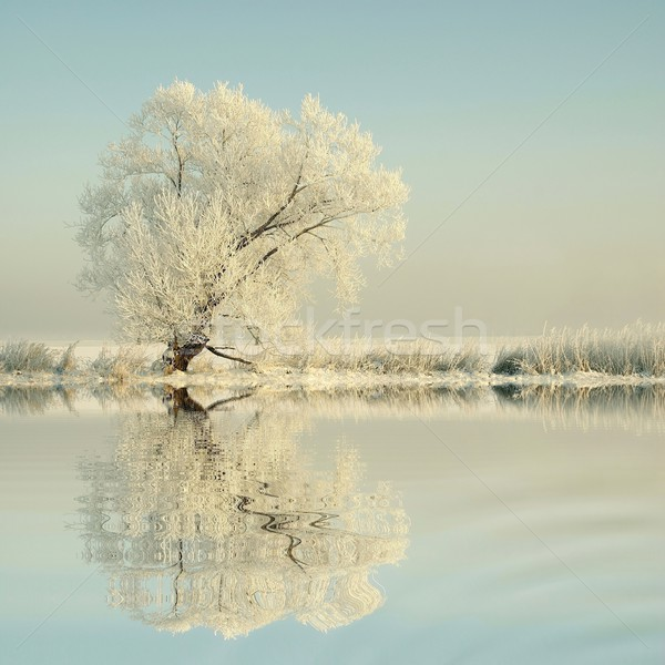 морозный зима дерево Sunshine Blue Sky отражение Сток-фото © nature78