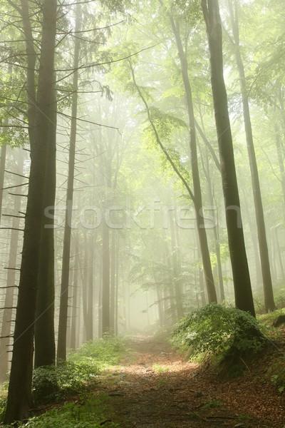 Misty primavera foresta percorso alberi strada Foto d'archivio © nature78