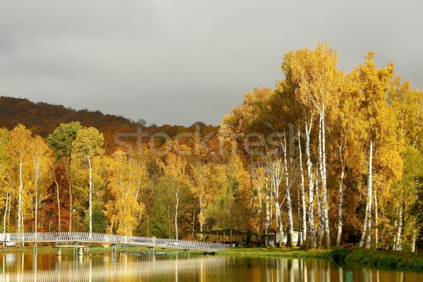 Autumn birches at dawn Stock photo © nature78