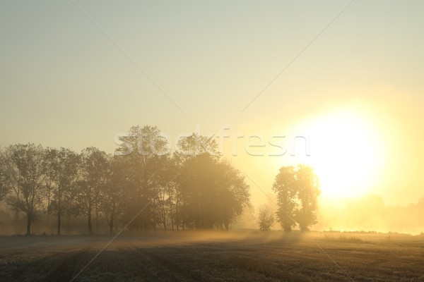 Sunrise over the misty meadow Stock photo © nature78