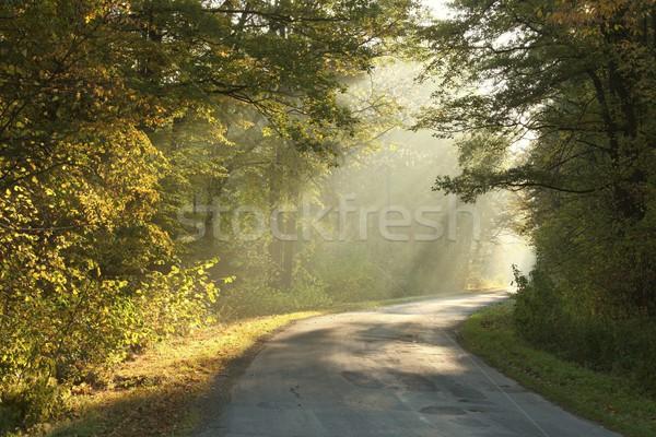 осень лес туманный утра работает Сток-фото © nature78