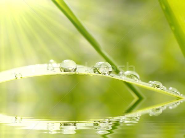 капли капли воды воды дождь утра солнце Сток-фото © nature78