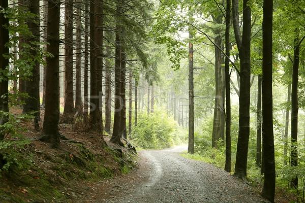 Stock fotó: Tavasz · erdő · köd · fenséges · tájkép · levél