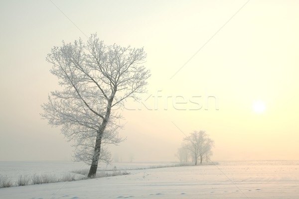 Ijzig winter boom dawn permanente alleen Stockfoto © nature78