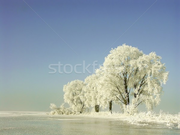 Frosty winter trees at dawn Stock photo © nature78