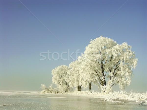 Fagyos tél fák hajnal kék ég reggel Stock fotó © nature78