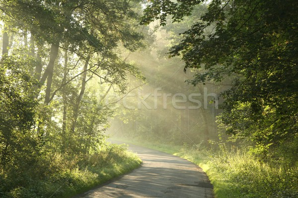 Spring forest at dawn Stock photo © nature78