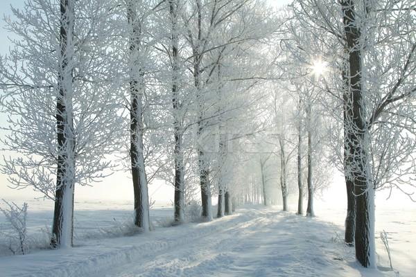 зима полоса морозный утра ведущий Сток-фото © nature78