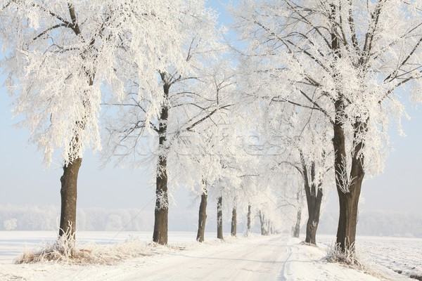Country road among frosted trees Stock photo © nature78