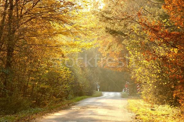 лес дороги рассвета туманный солнце лист Сток-фото © nature78