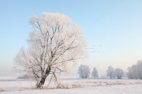 Fagyos tél fák hajnal napos természet Stock fotó © nature78