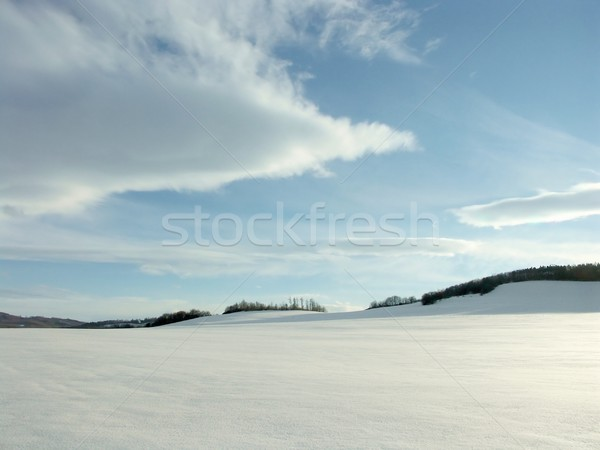 Winter landscape on a sunny day Stock photo © nature78