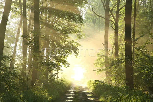 пути весны лесу рассвета лес туманный Сток-фото © nature78