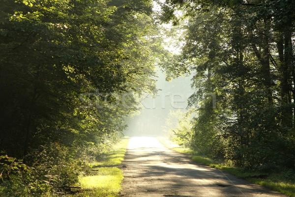 Tavasz erdő hajnal sáv fut lombhullató Stock fotó © nature78