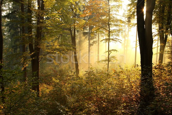 Stock photo: Picturesque autumnal forest