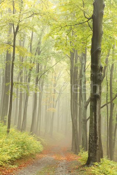 лес тропе рано осень гор южный Сток-фото © nature78