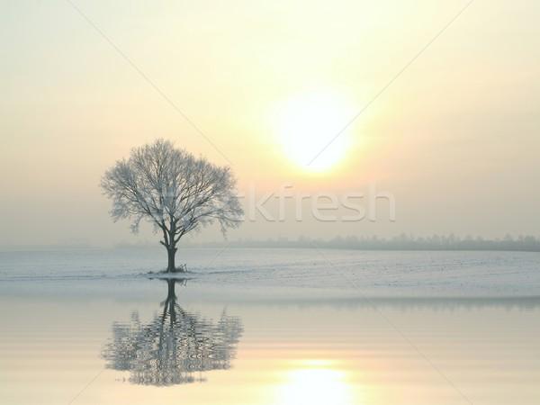 Dąb słoneczny zimą rano Błękitne niebo drzewo Zdjęcia stock © nature78
