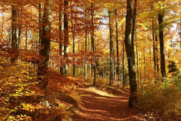 Forestales colores otono rojo naranja temporada de otoño Foto stock © nature78