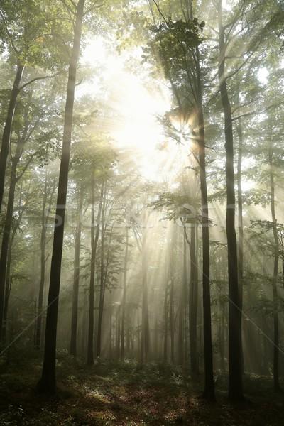 Amanecer otono forestales temprano caduco paisaje Foto stock © nature78