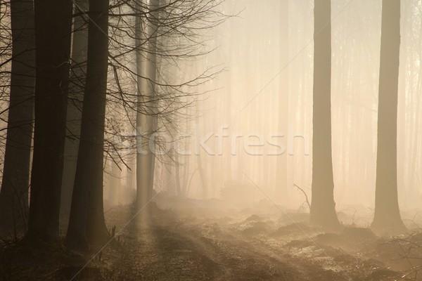 Yol puslu erken bahar orman Stok fotoğraf © nature78