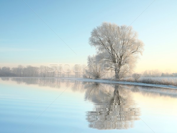 Tájkép tél fa hajnal fagyos megvilágított Stock fotó © nature78