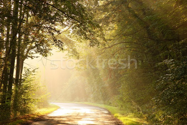 полоса осень лесу рассвета работает Сток-фото © nature78
