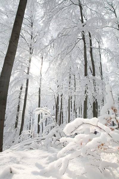Erdő fagyos tél nap hegy emelkedő Stock fotó © nature78