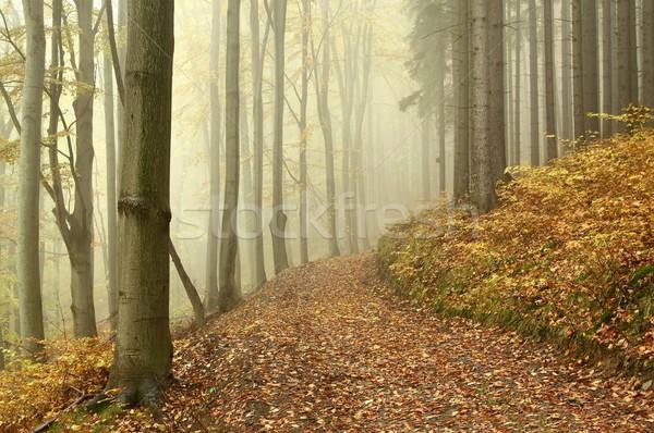 тропе туманный осень лес пути ведущий Сток-фото © nature78