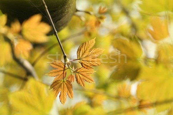 Spring leaves on a tree branch Stock photo © nature78