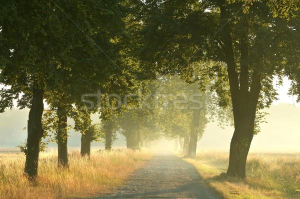 Stock fotó: Vidéki · út · nyár · reggel · vezető · erdő · sugarak