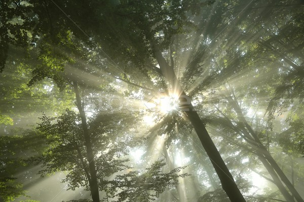 Gündoğumu bahar orman yağış miktarı manzara ağaçlar Stok fotoğraf © nature78