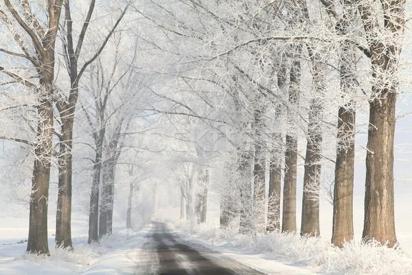 Winter rural lane at dawn Stock photo © nature78