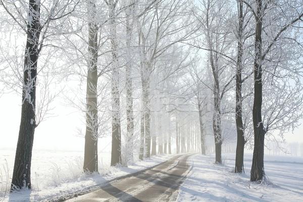 Estrada rural árvores inverno coberto geada Foto stock © nature78