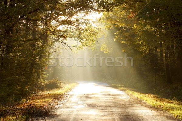 Erdő út ősz reggel színek őszi levelek Stock fotó © nature78