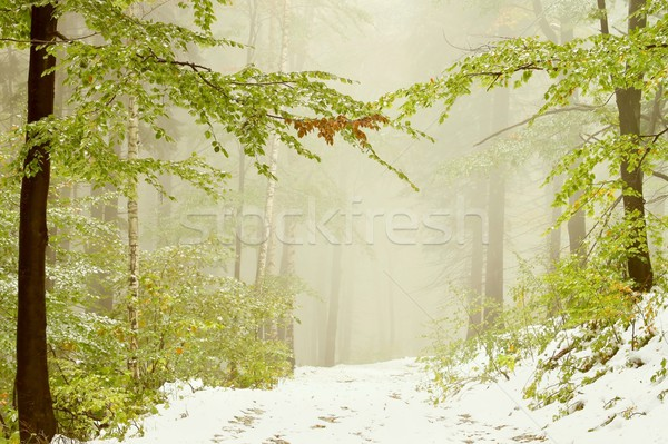 Autumn forest covered with snow Stock photo © nature78