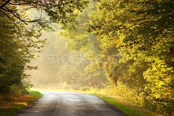 Lane in the autumnal forest Stock photo © nature78