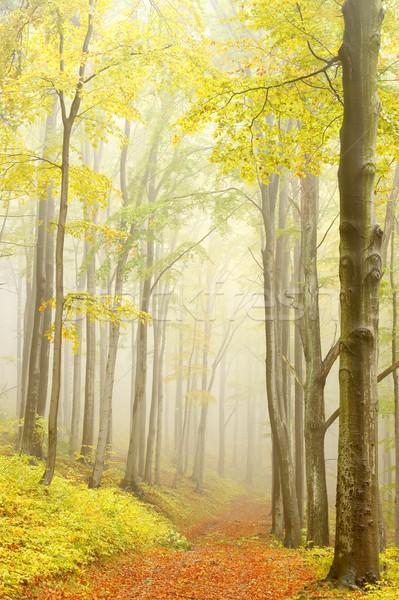 Chemin misty automne forêt montagne sentier Photo stock © nature78